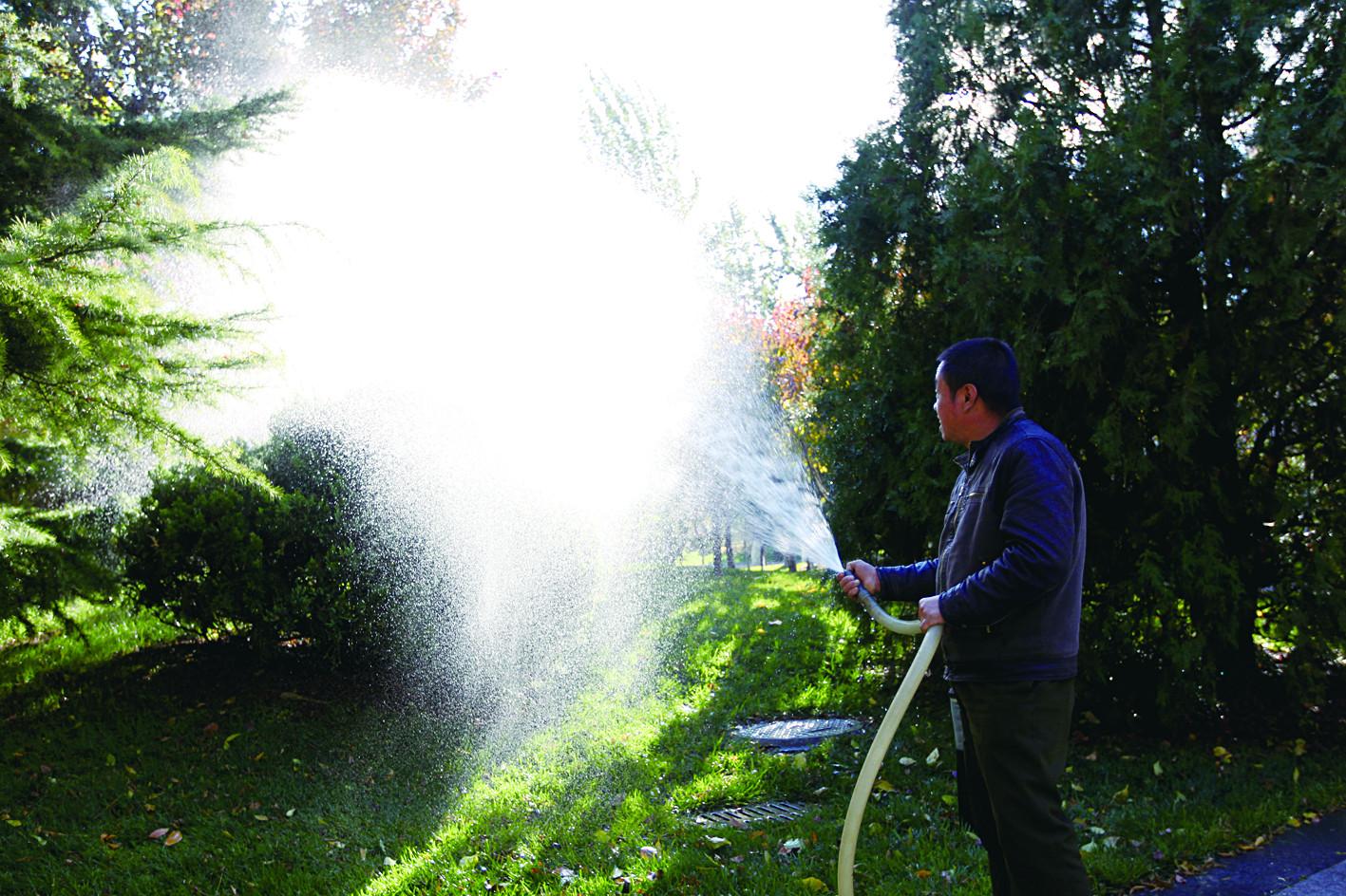 后勤工作人员给树木浇水